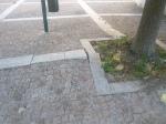 radici albero