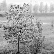 10 - fantasmi nel parco