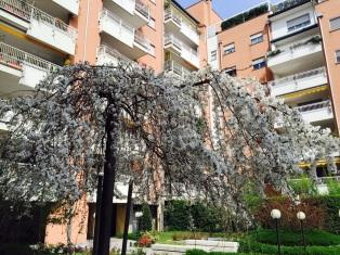 14 -i nostri fiori