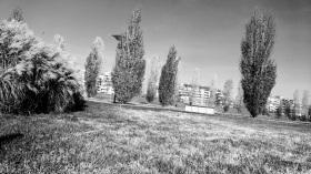 15 - la bellezza della natura in citta