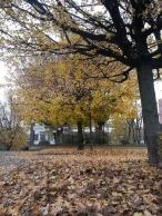 17 - cadono le foglie in Via Carlo Perini