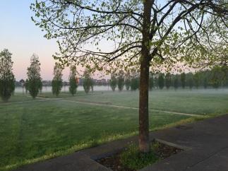 23 - Parco Certosa in un lago di nebbia