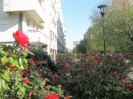 37 - le rose d'autunno