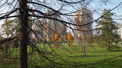 8 - alberi e torri